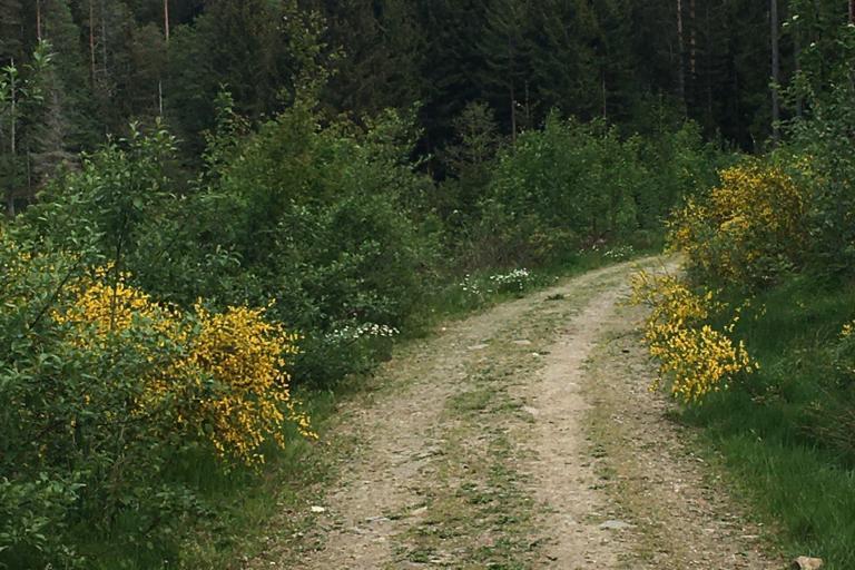 Kräuterdorf Nagel - Wildkräuterwanderung rund um den Nageler See und zum Bibergebiet