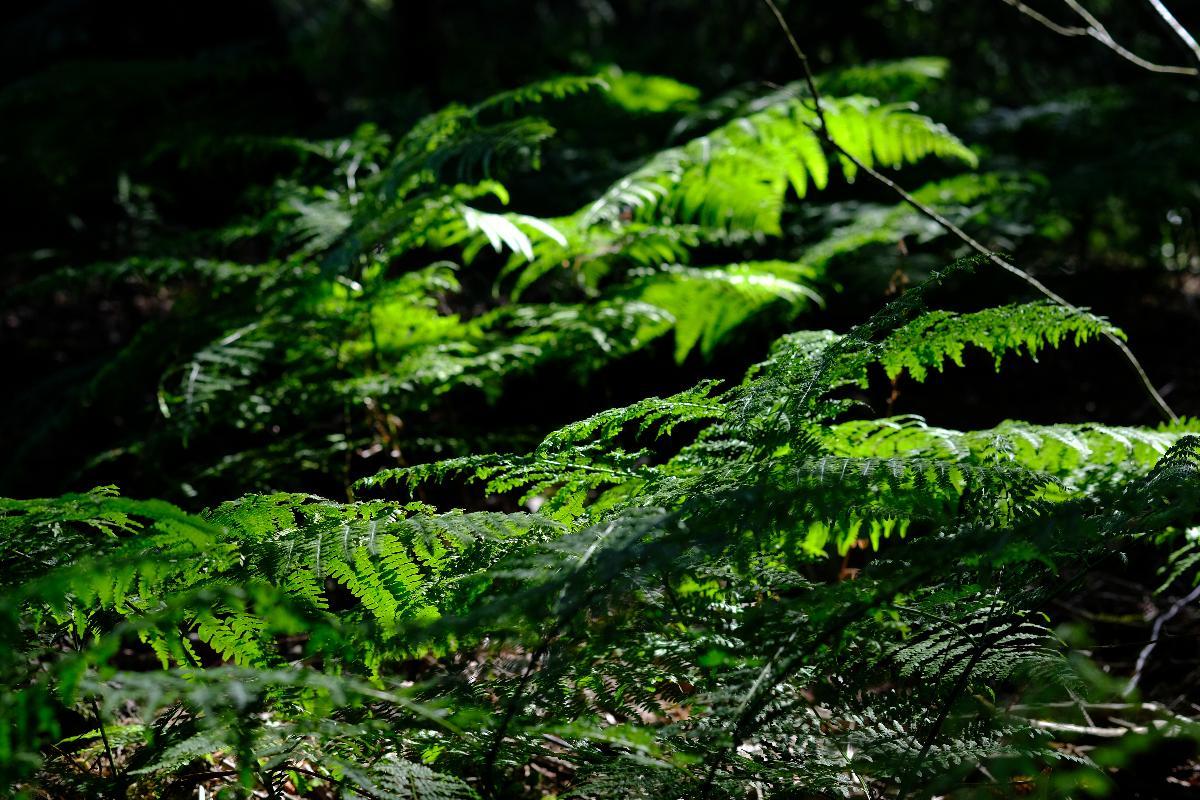Hohenberg. Die Kraft  des Waldes