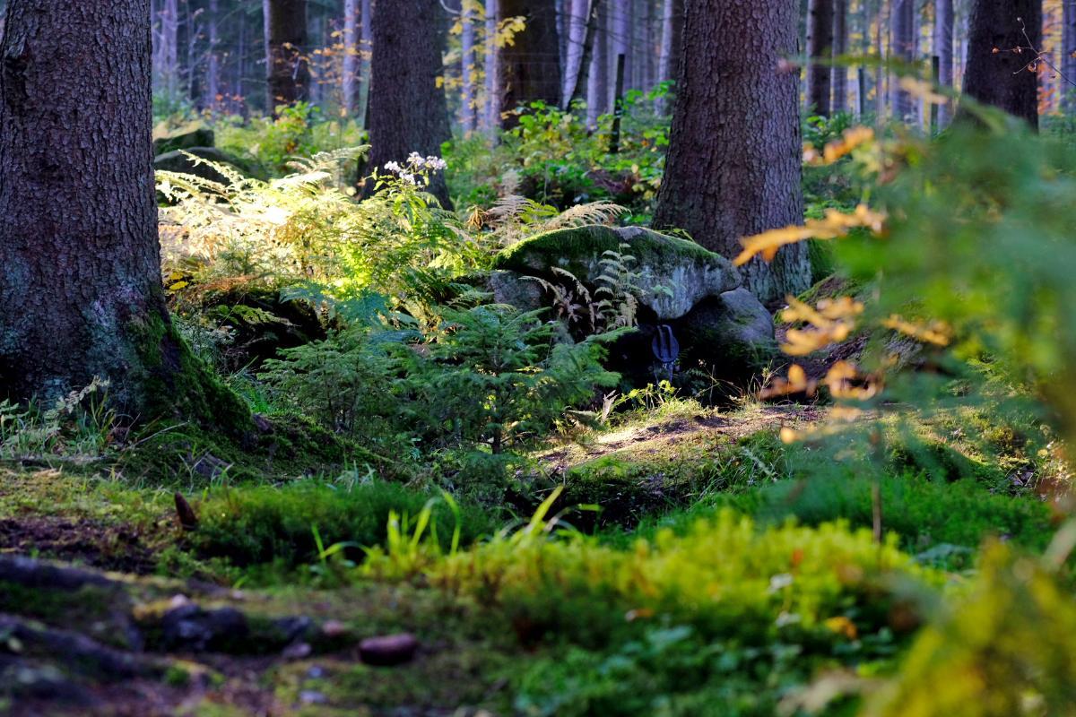Steinwald. Durch Stein & Wald