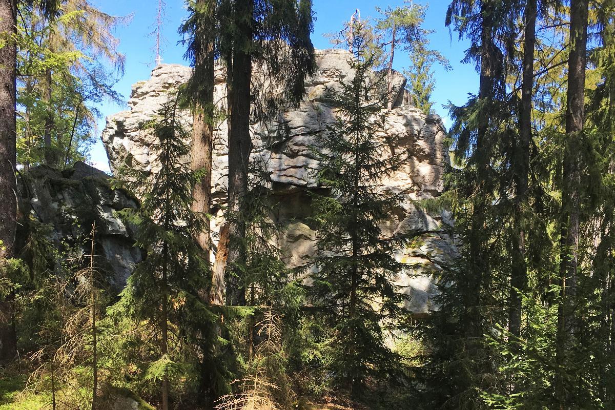 Steinwald. Bergauf Bergab